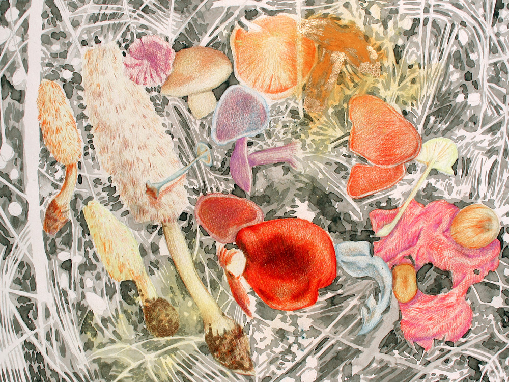 Multiple Mushrooms, 24 x 18, 2013, Watercolor and Pigment Dust and Acrylic on Paper