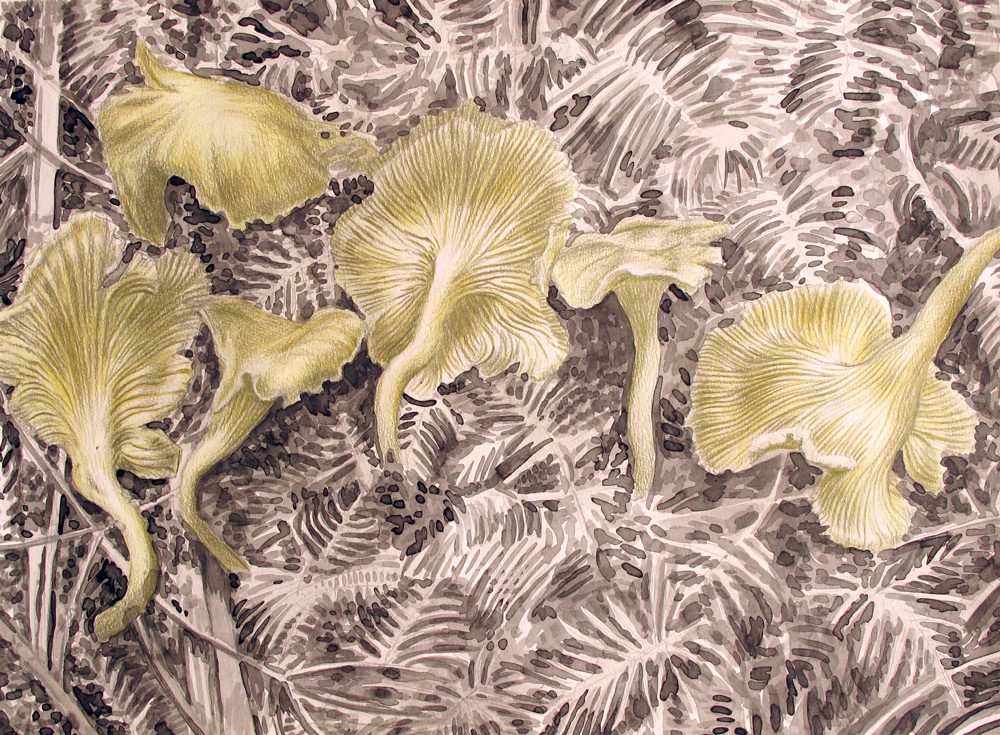 Chanterelle Mushrooms, 24 x 18, 2013, Watercolor and Pigment Dust and Acrylic on Paper